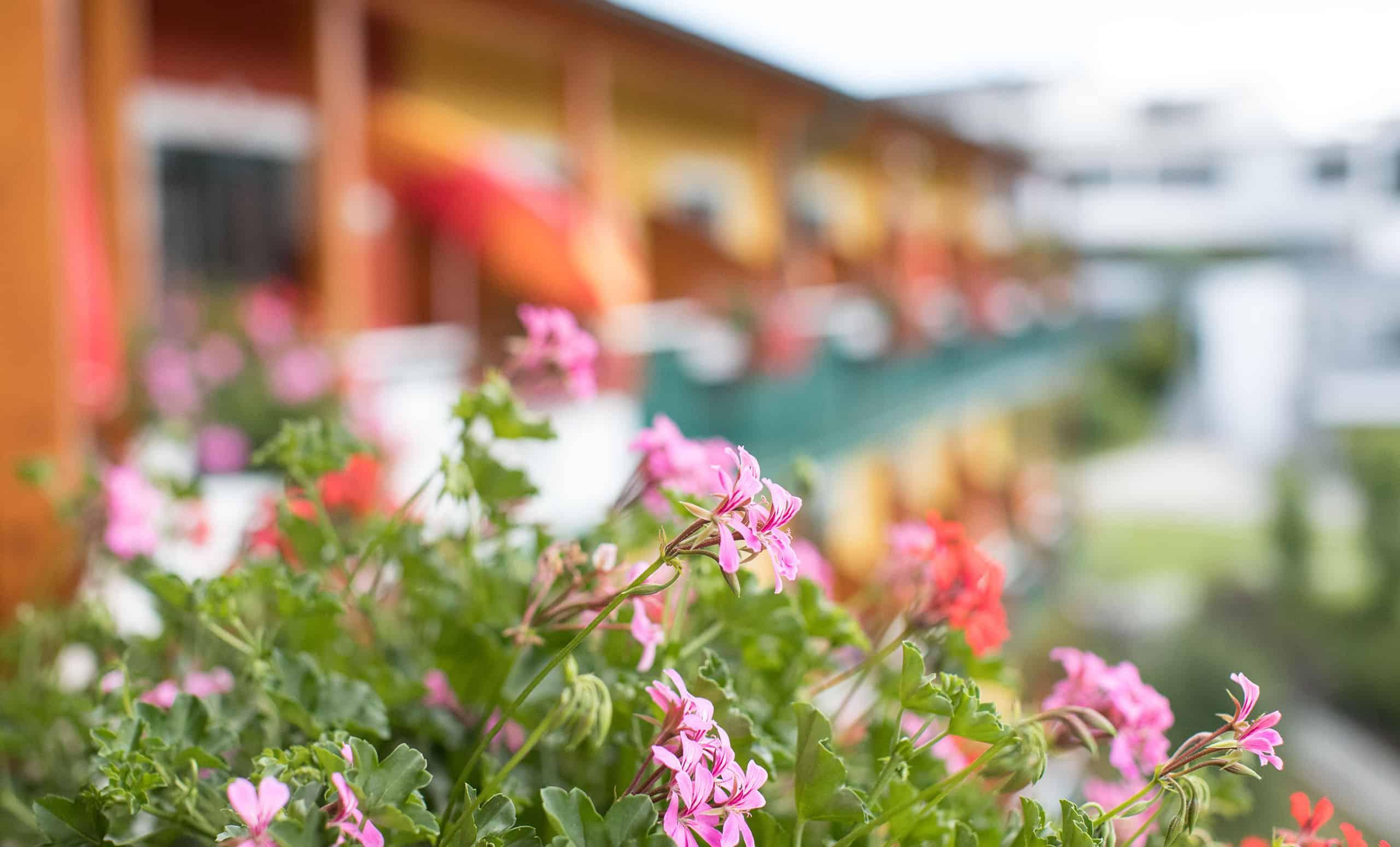 conversory-puchasplus-stegersbach-zirbenzimmer-topkomfort-thermenblick-balkon