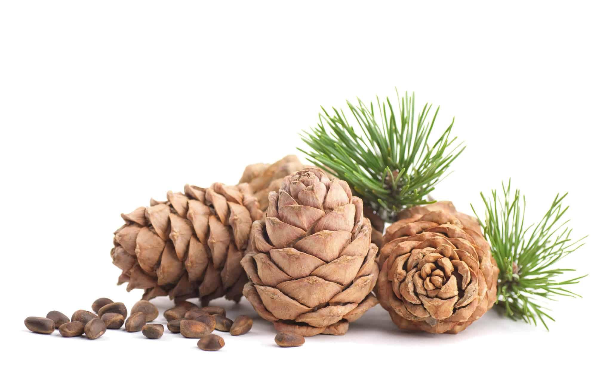 conversory-puchasplus-zirbe-pine-essential-oil